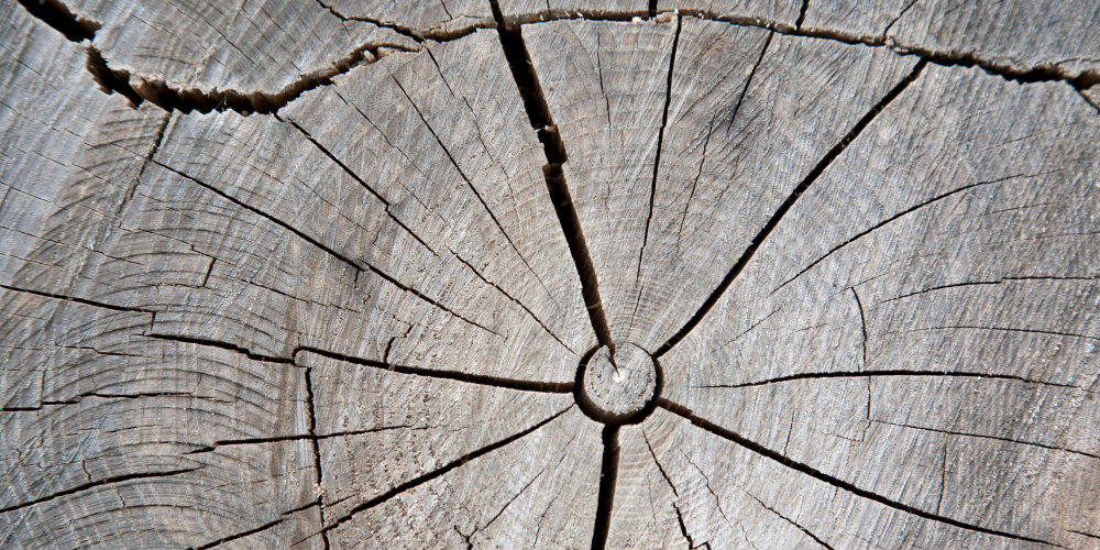 How to Stop Wood from Splitting when Drying